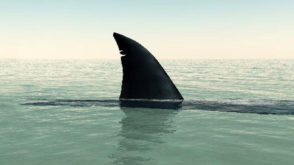 generick shark_20680