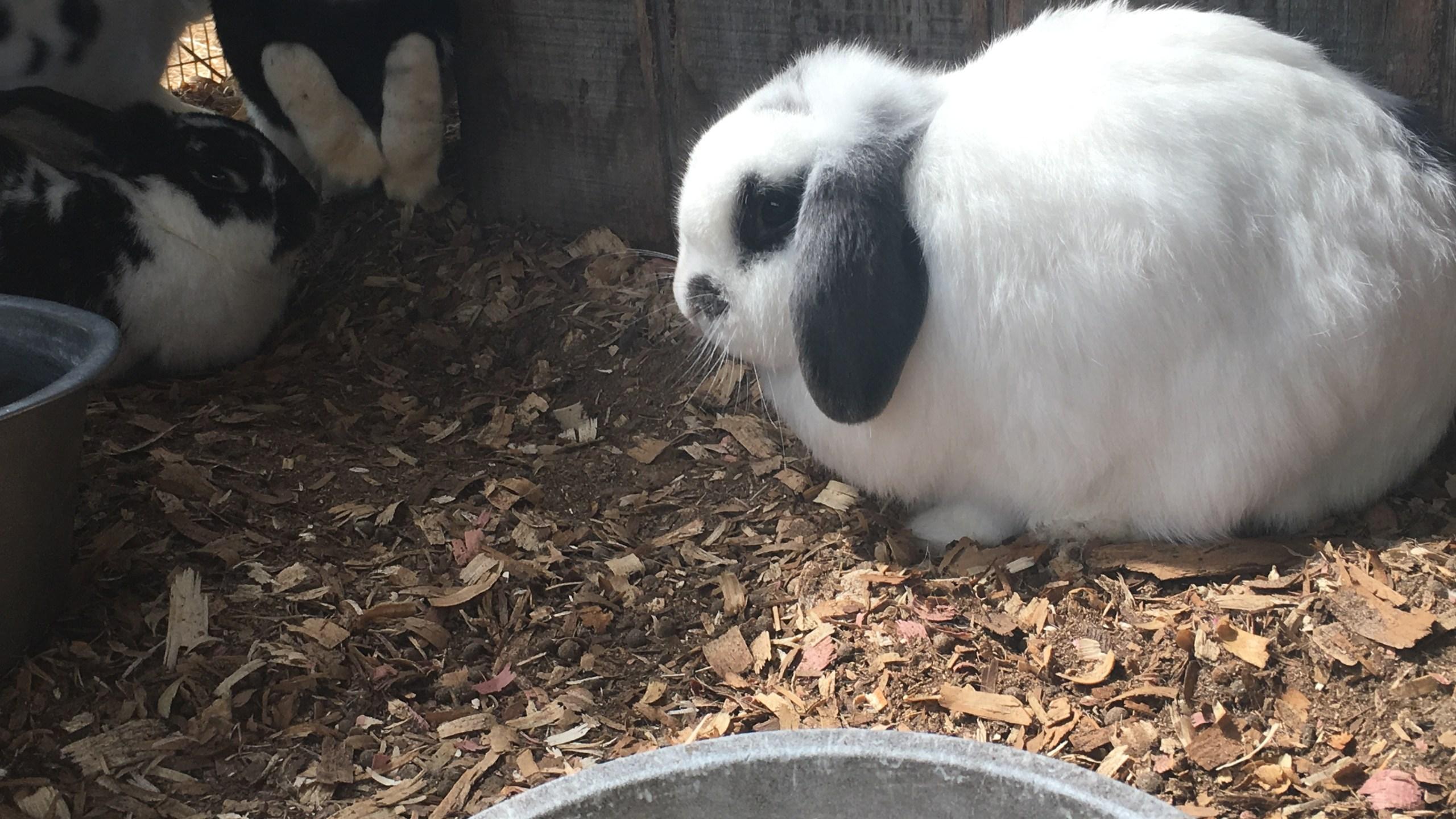 rabbit_125140
