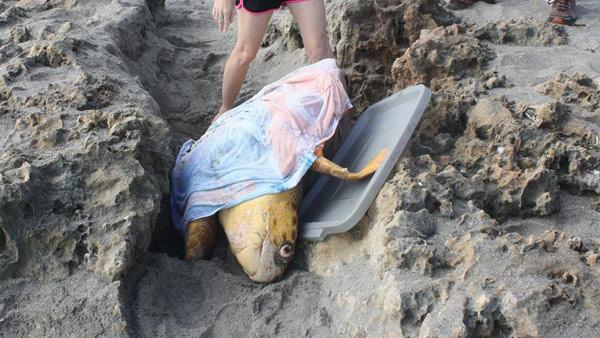Turtle Rescue_165197