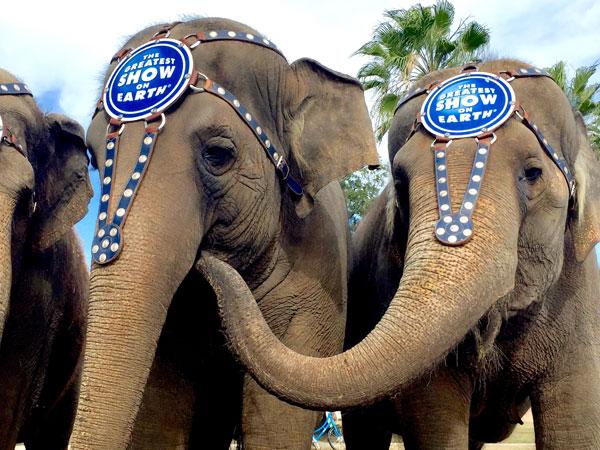 elephants2_94853