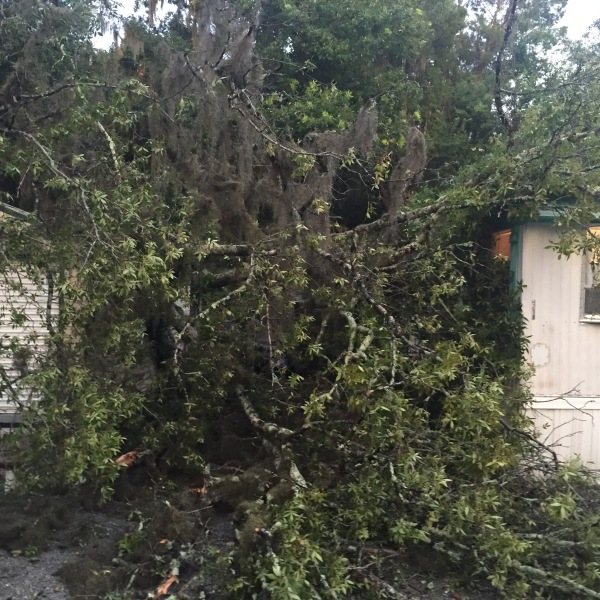 tree mobile home_171295