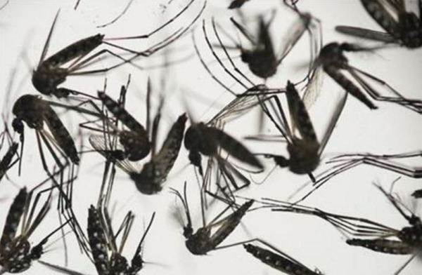 Brody - Tampa ranked 16th most mosquito-infested city