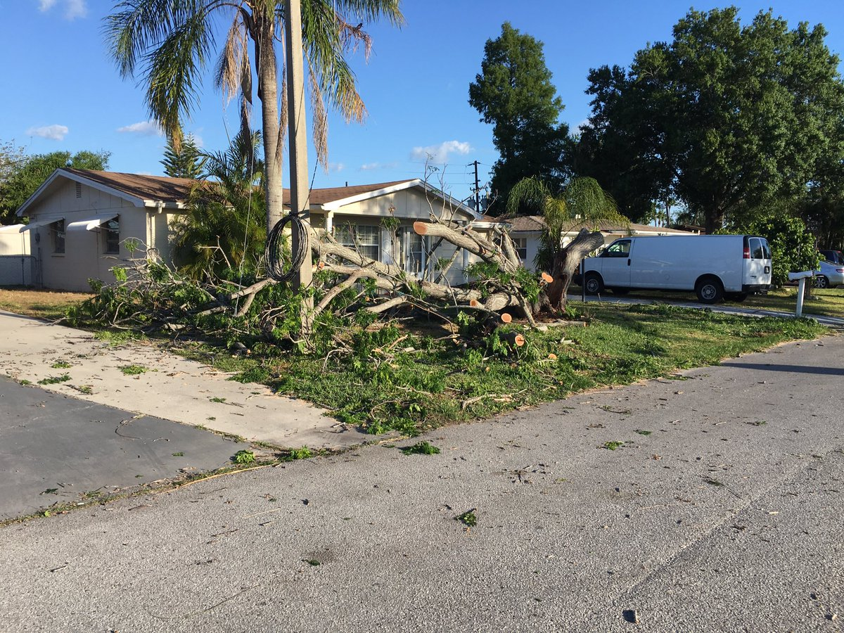 tree down Pasco_358042