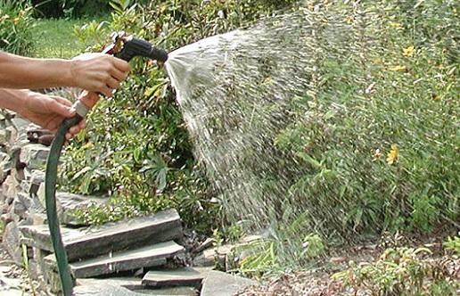 Gardening Watering_371392