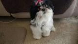 Price's puppy_413102