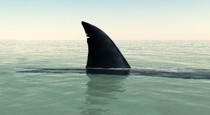 shark-fin_406283