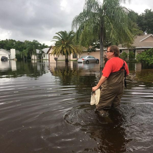 manatee flooding_437615