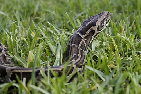 Python Challenge_421008