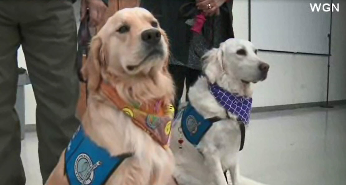 TherapyDogs_441266