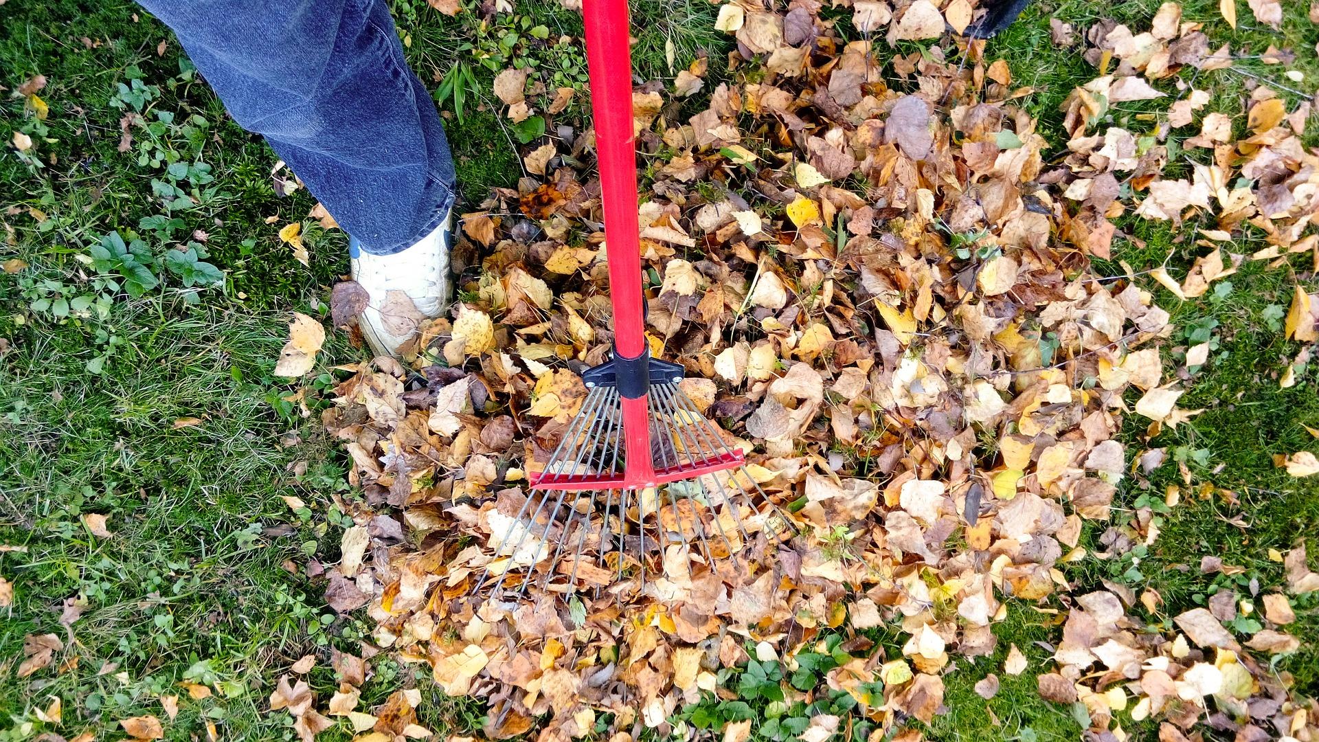 raking-2756006_1920_499242