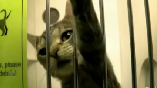 ?Global Cat Day? recognizes the need to adopt, foster cats