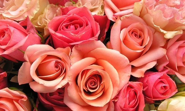 roses-flowers-valentines-day_1517879321399_340223_ver1-0_33247436_ver1-0_640_360_556368