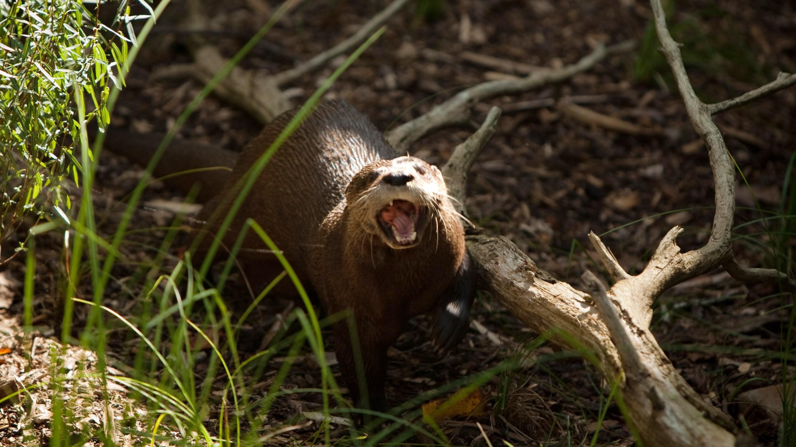 Washington's National Zoo Previews _American Trail_ Exhibit_581306