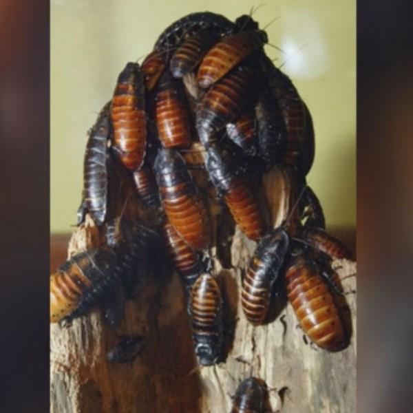 cockroaches_1527461213636.JPG