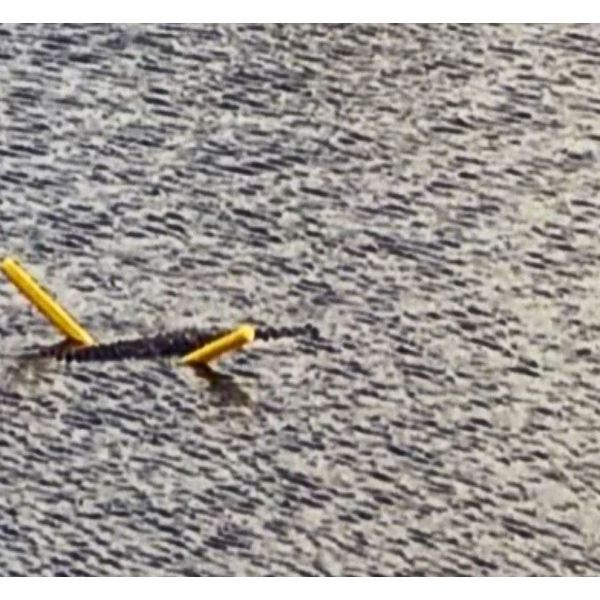 Crocodile seen floating on pool noodle
