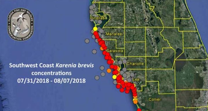 How to check for red tide before going to the beach