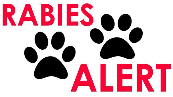 r-best-rabies-alert-mug-ba_1520620429863.jpg