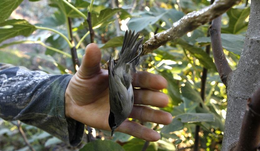 Cyprus-Crisis Songbirds_1534623388130