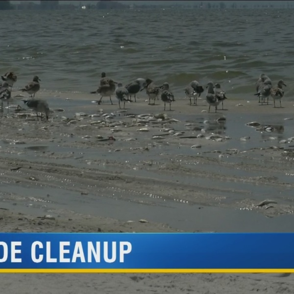 Red Tide Cleanup in Pinellas