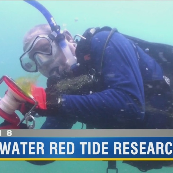 Underwater red tide research