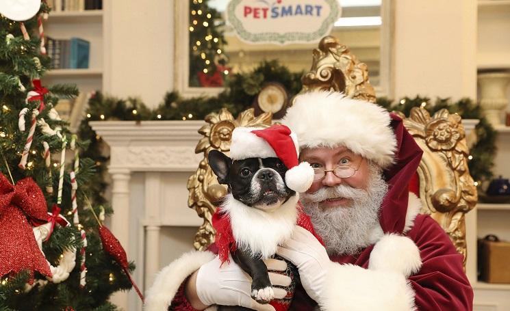 Pets Get Free Photos With Santa At Petsmart