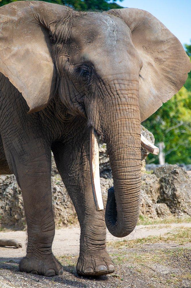 zoo miami cita_1551127468944.jpg-873703993.jpg