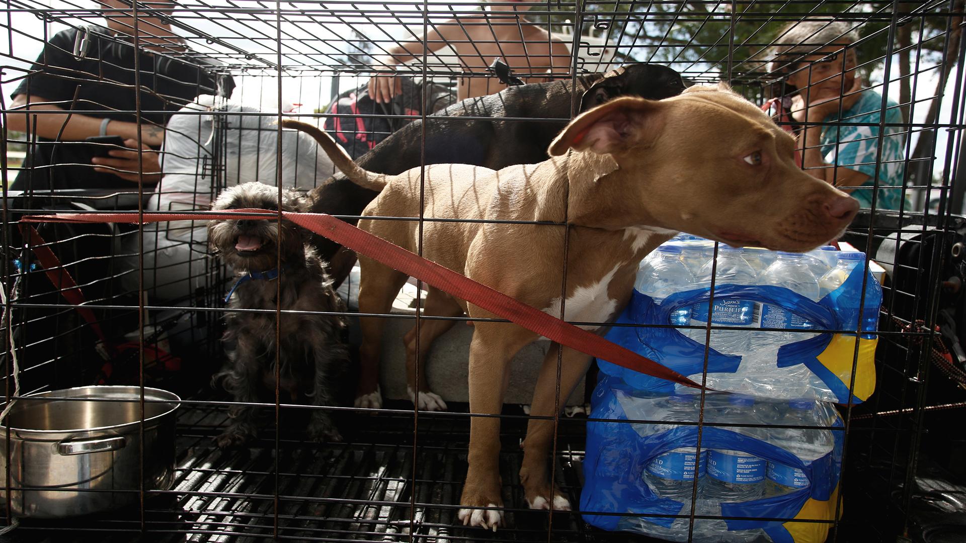 Dog hurricane_1553014881208.jpg.jpg