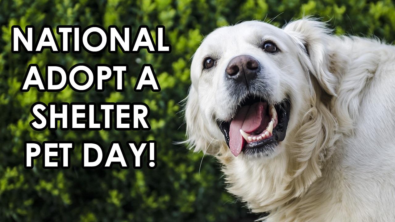 ADOPT A SHELTER PET DAY for website_1525101224370.jpg.jpg