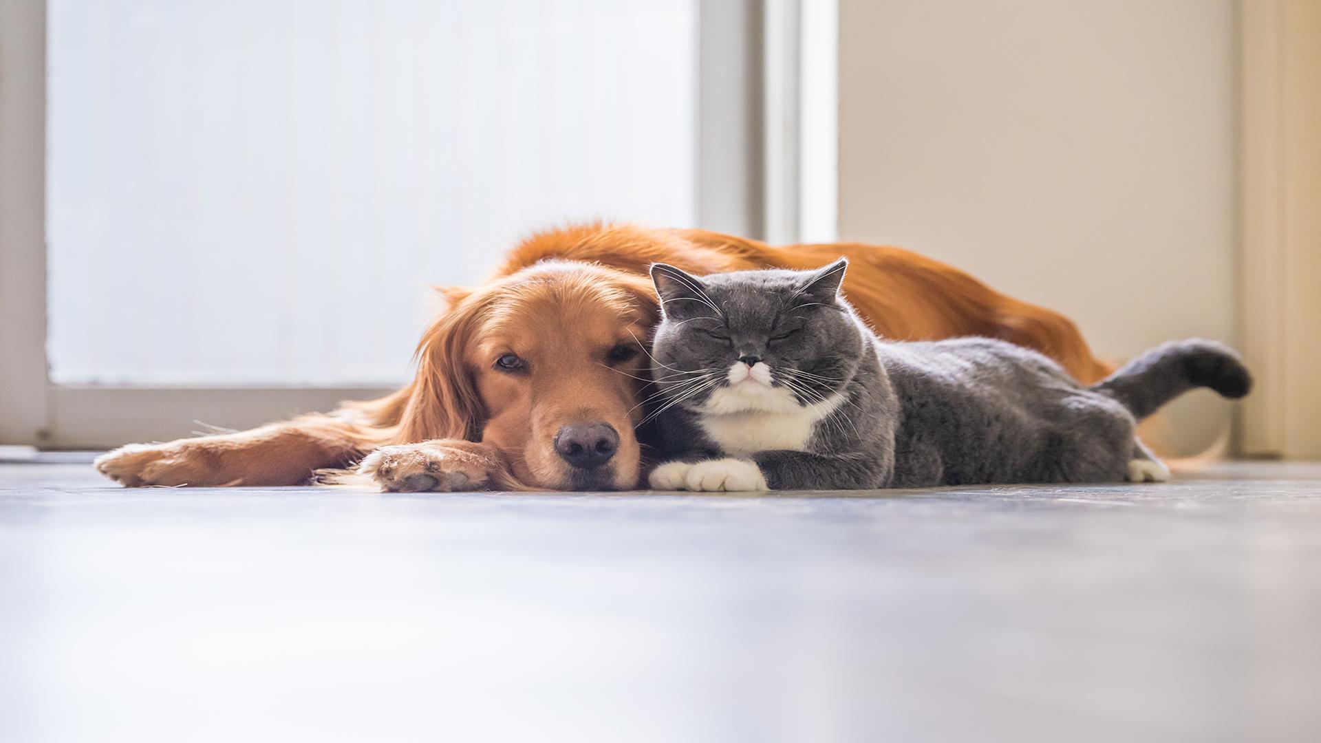 generic dog and cat