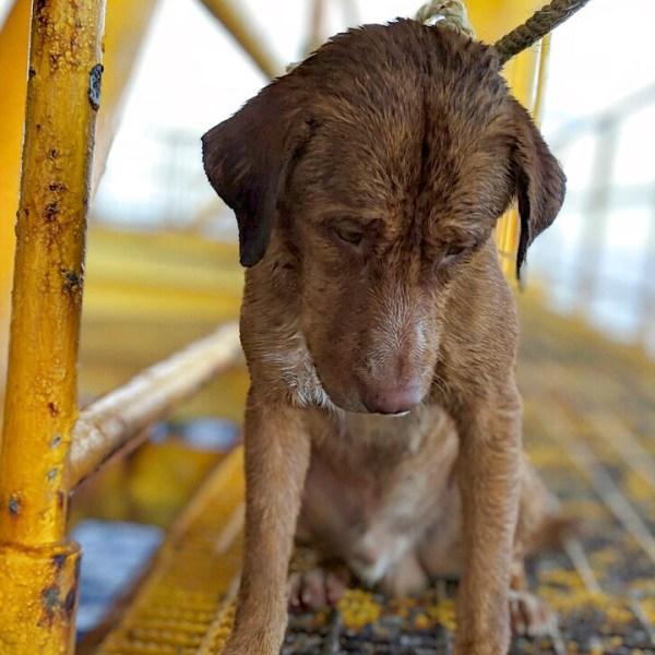 dog rescued_1555433383949.jpg-873772846.jpg