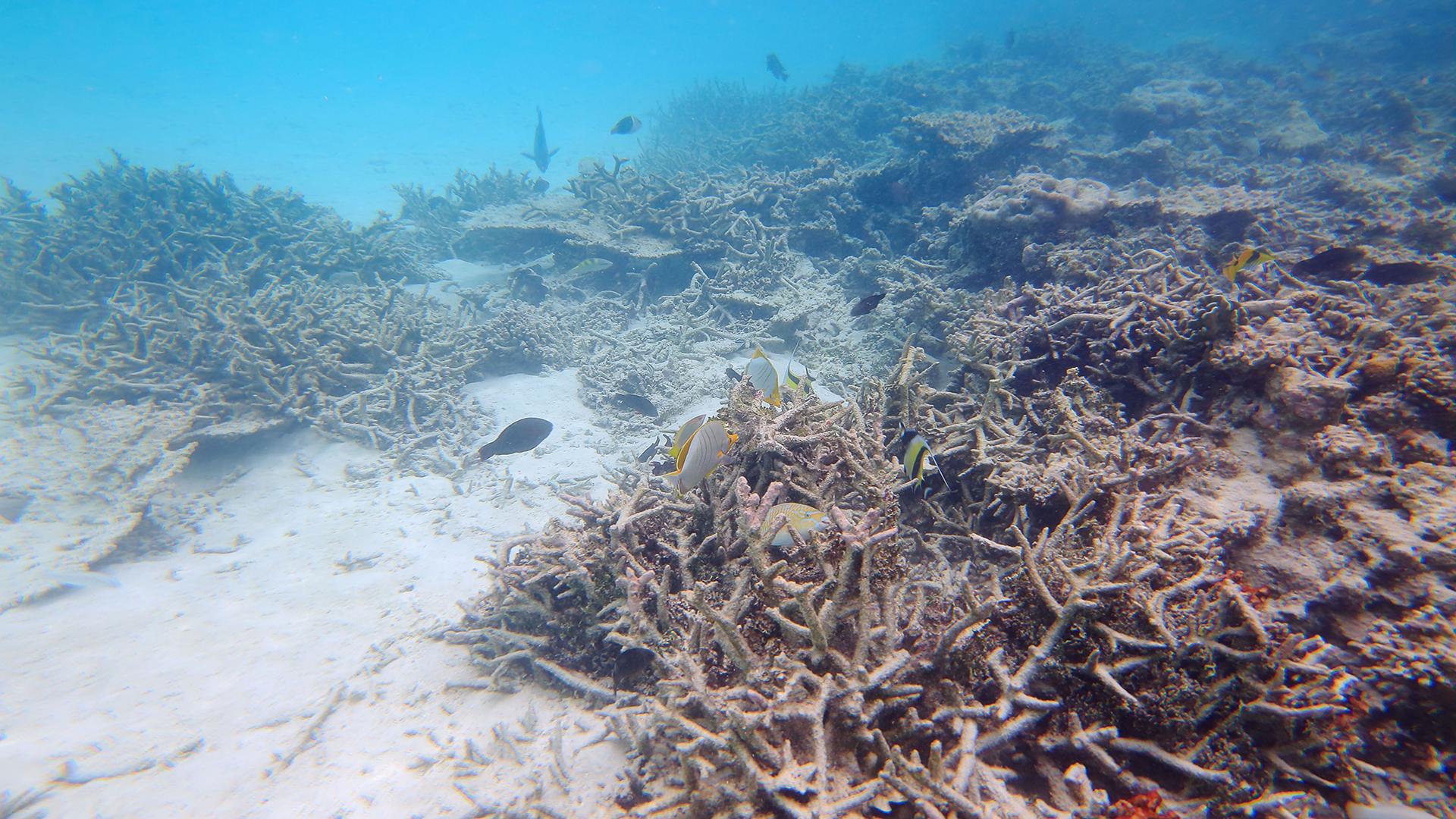 bleached coral reef