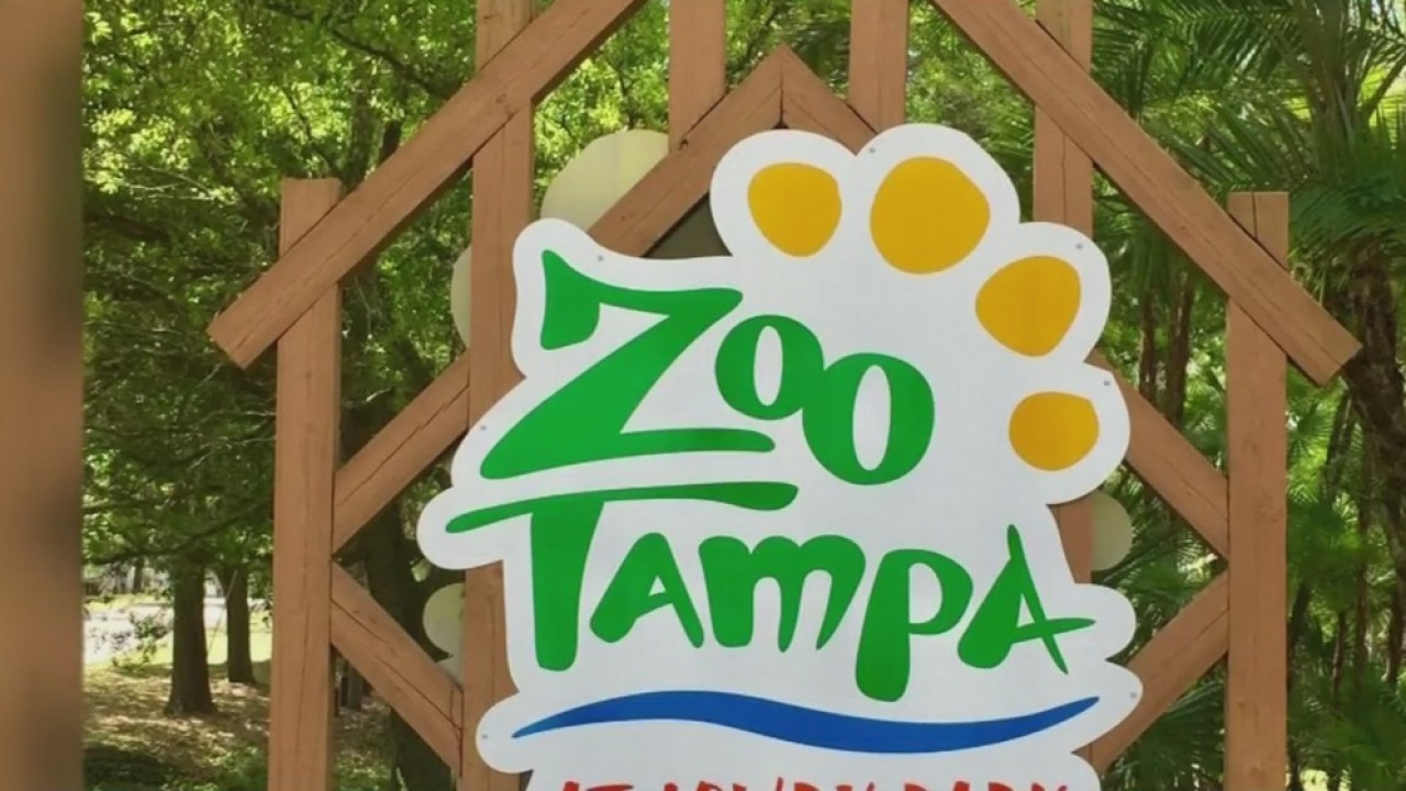ZooTampa_announces_changes_to_manatee_ca_1_20181210223104