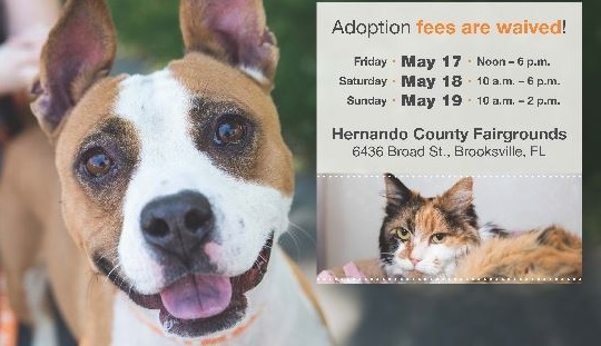 adoption fees waived_1558110560206.JPG.jpg