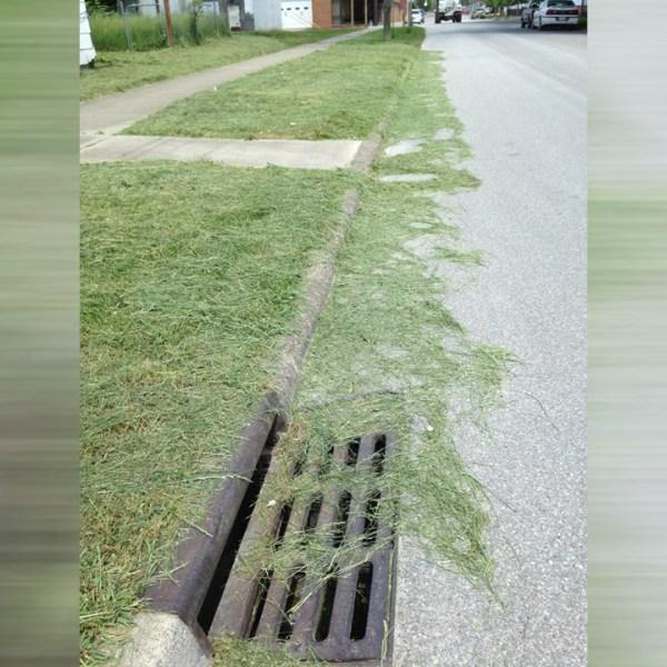 grass_1558041123957-873772846.jpg