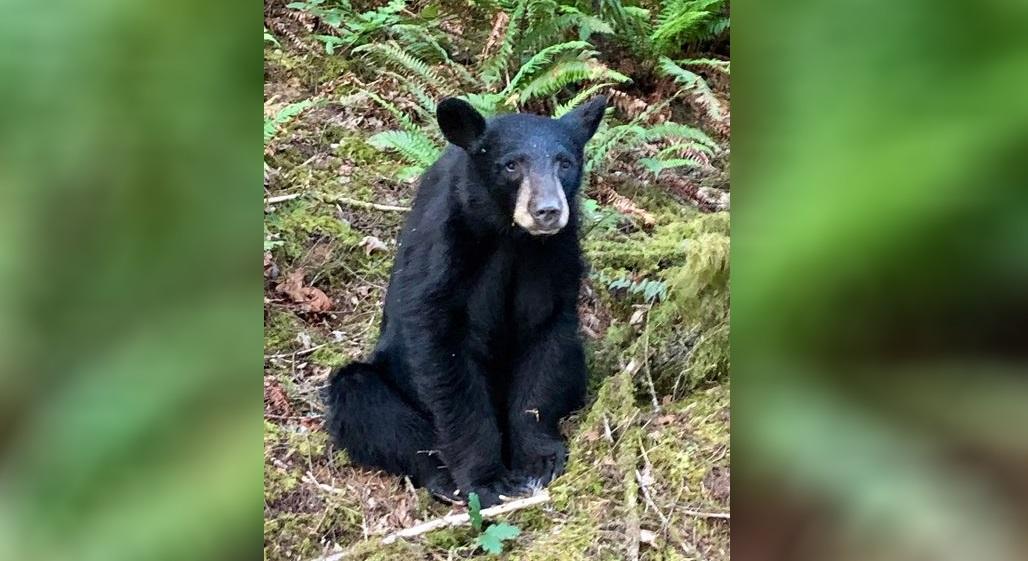 black bear killed_1560852280271.JPG.jpg