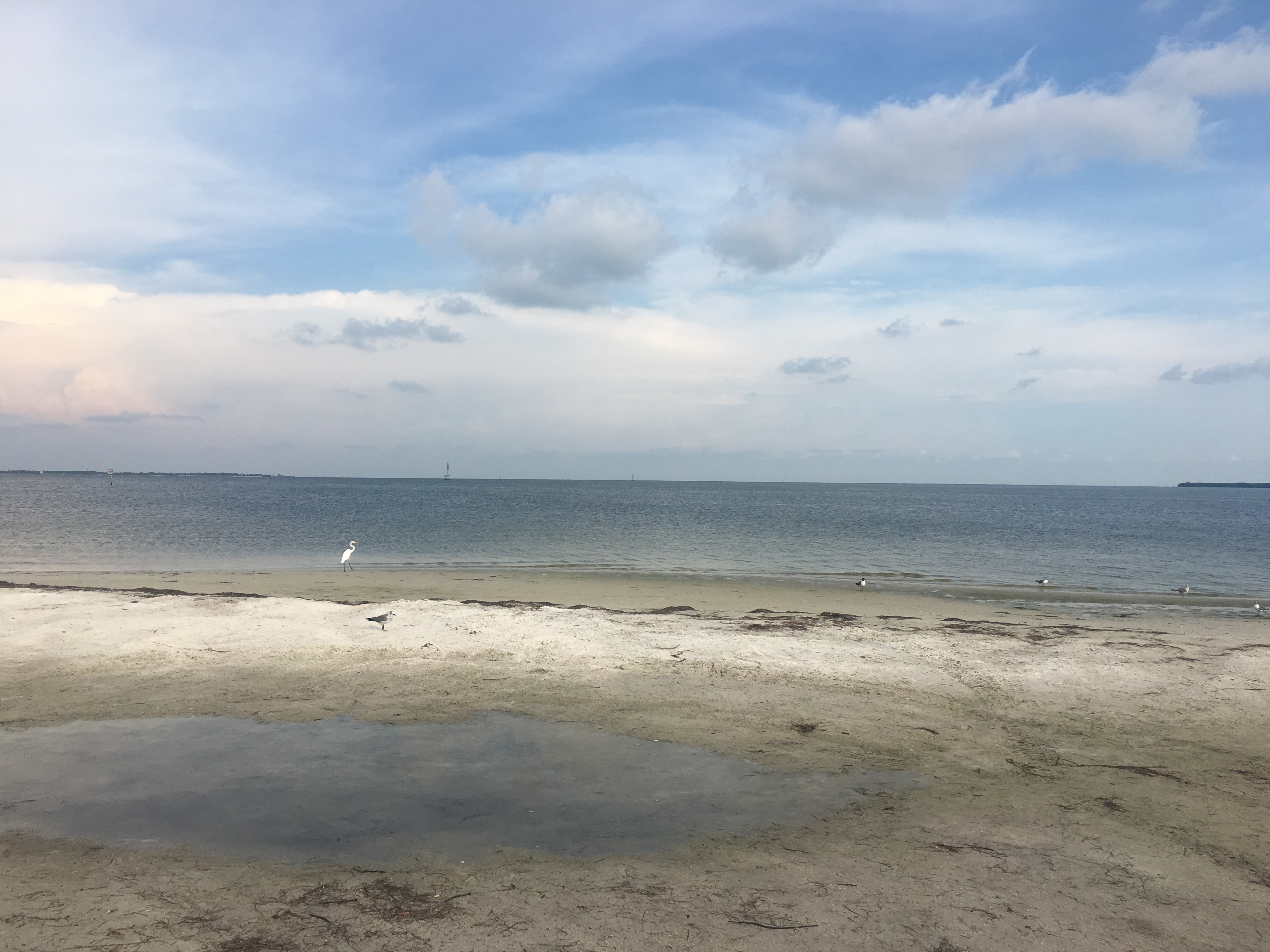 Flesh-eating bacteria not just in the water | WFLA