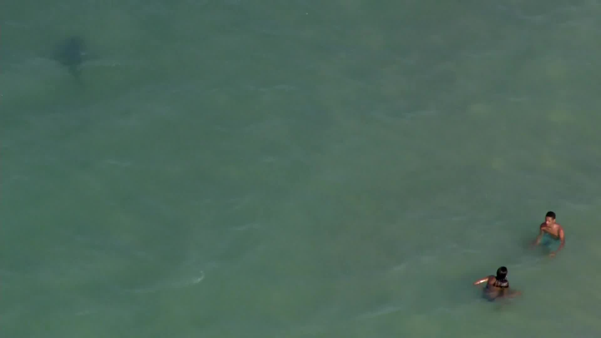 WATCH: Shark spotted swimming close to shore in Daytona Beach | WFLA