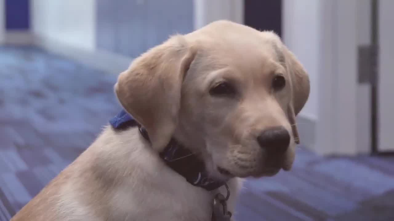 Tampa Bay Lightning add puppy named 'Bolt' to team   WFLA
