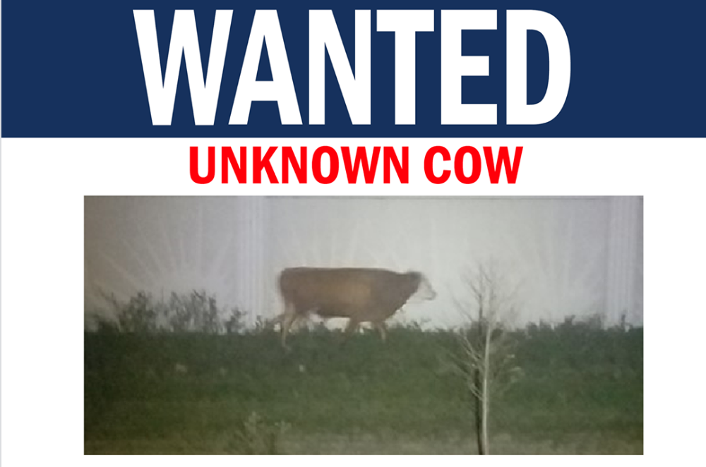 Wanted Poster of Cow in South Florida