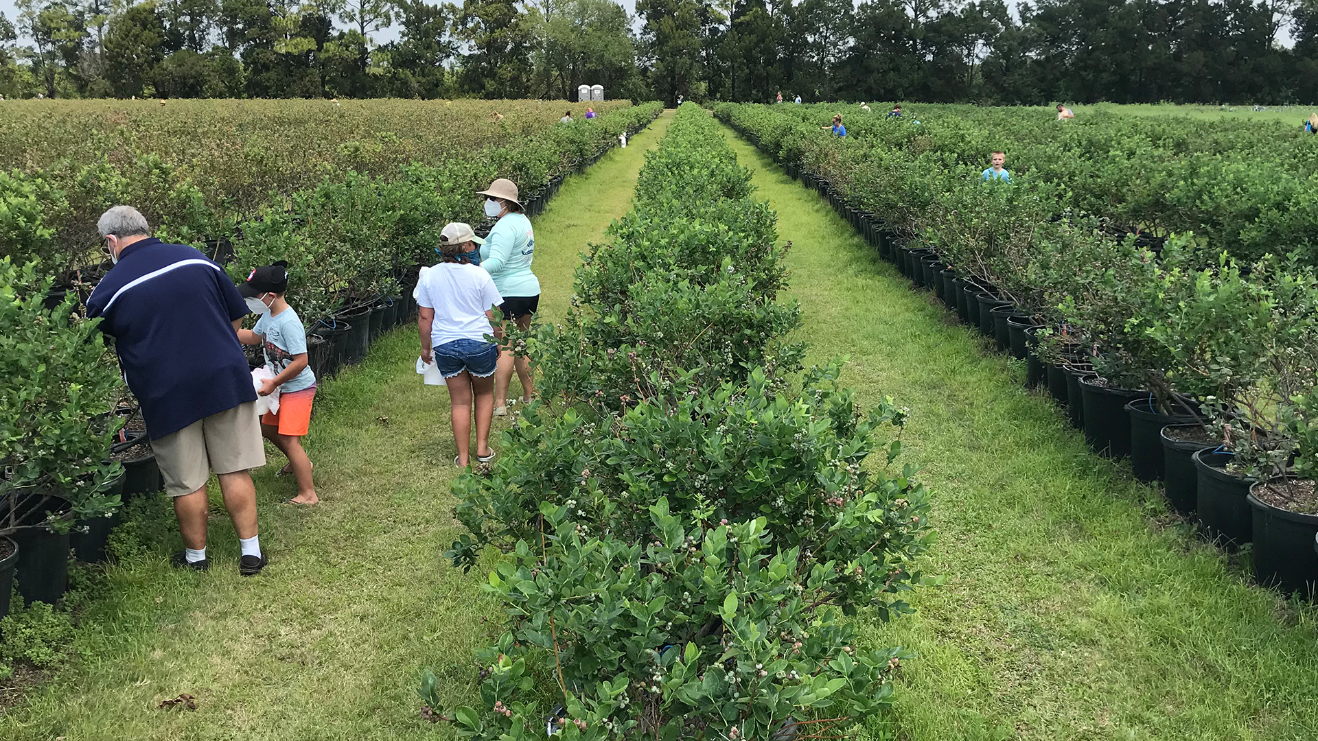 Local Blueberries For A Deep Discount Farmer Hopes To Break Even Wfla