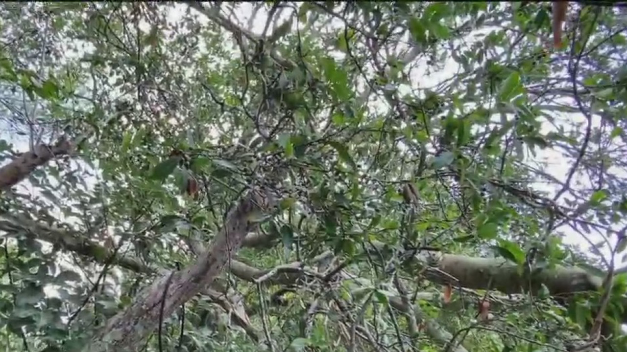 Elderly Pasco couple told to remove tree that fell on their property, even though tree came from public land
